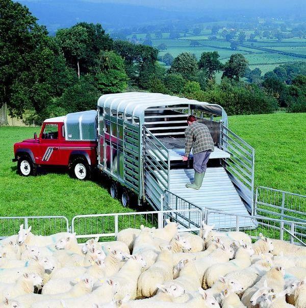 rimorchio trasporto bestiame IFOR Williams TA510